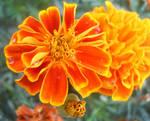 Water Flower by TheHufflepuffArtist