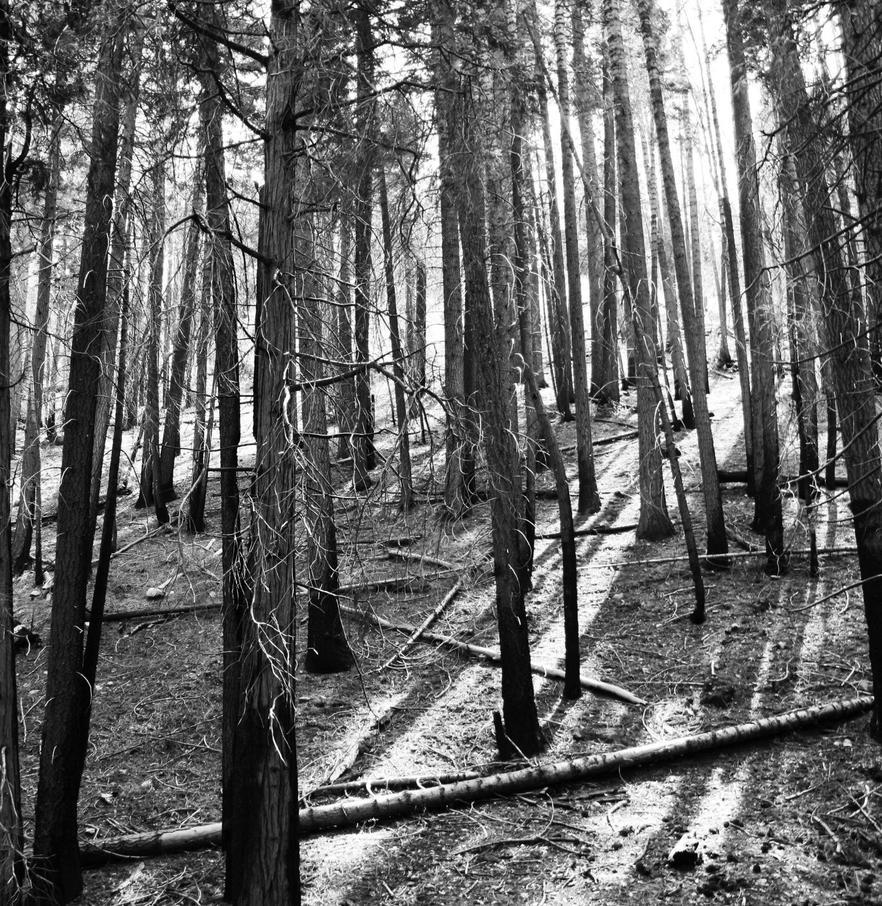 Dead Forest by TheHufflepuffArtist