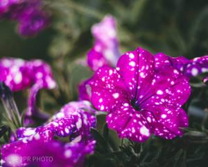 flowers mood