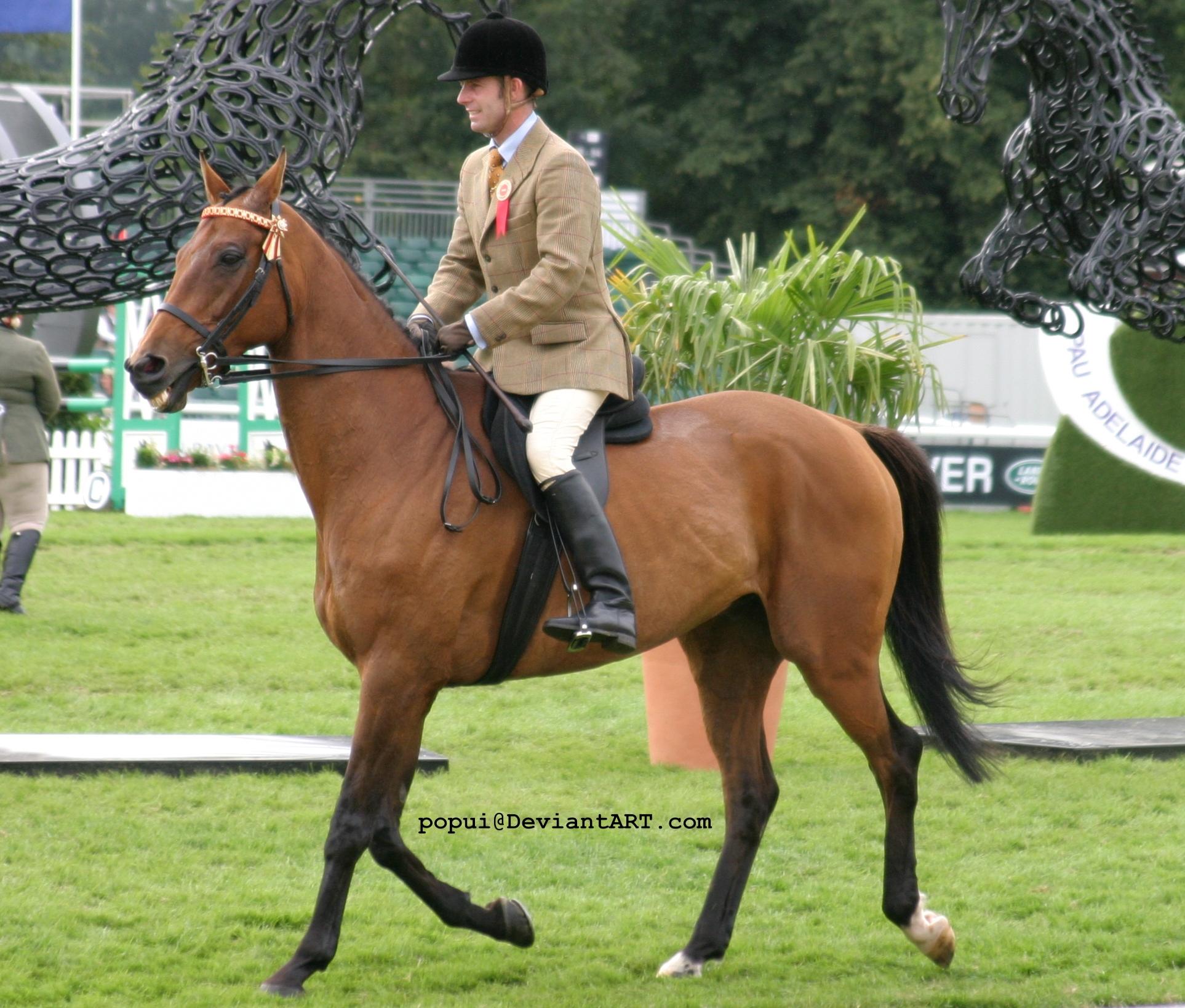 bay horse show - photo #9