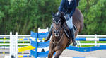Warmblood Showjumping Stock by popui
