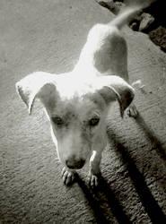Doggie by bountyhunter25