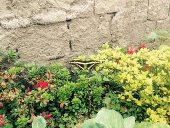 Butterfly in my Garden   by NatarioSantos