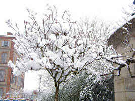 Snowy tree by Ceridwenn