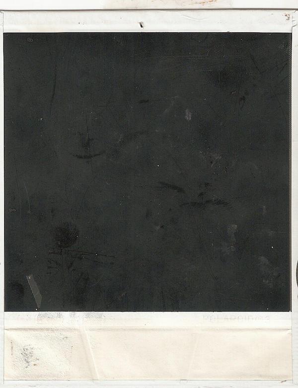 polaroid III by fernnifer
