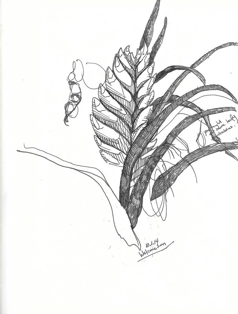sketching, december 2 by fernnifer