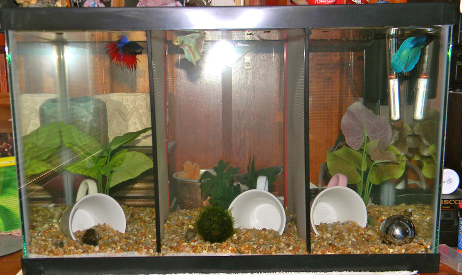 New betta tank by gizmo the freaky on deviantart for Split fish tank