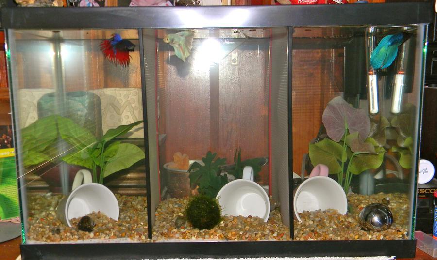 New betta tank by gizmo the freaky on deviantart for Split fish tank