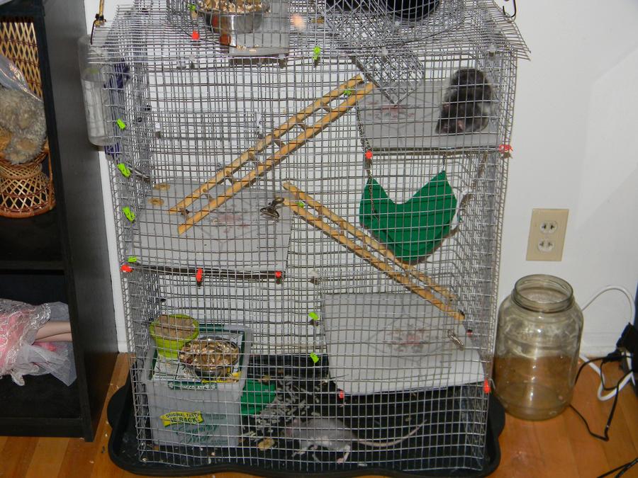 Home Built Cage Materials Rats