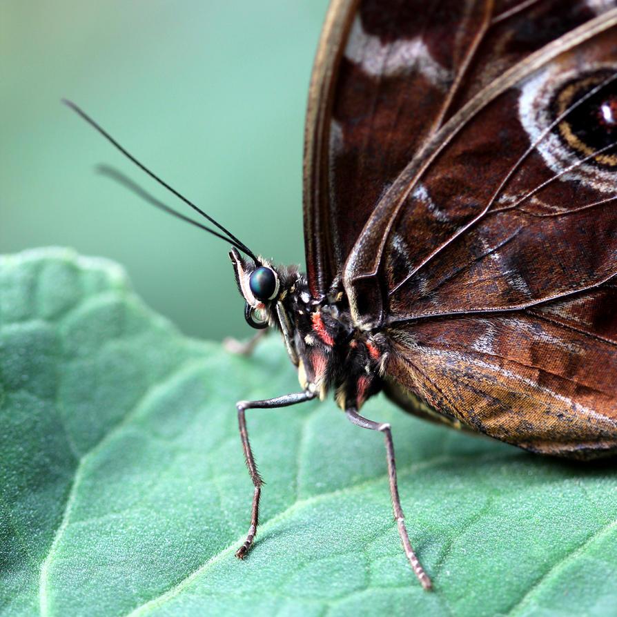Butterfly 01 by s-kmp