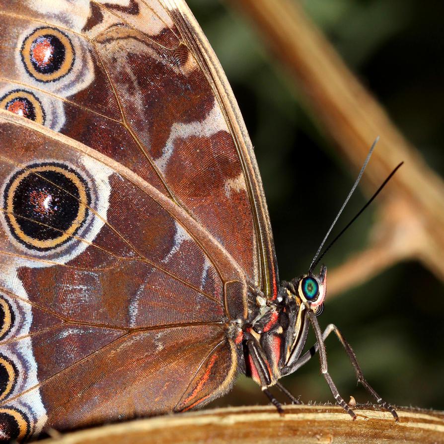 Butterfly 08 by s-kmp