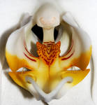 White Orchid 01