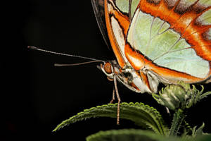 Butterfly lll by s-kmp