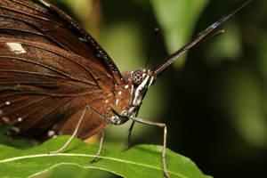 Butterfly lV by s-kmp
