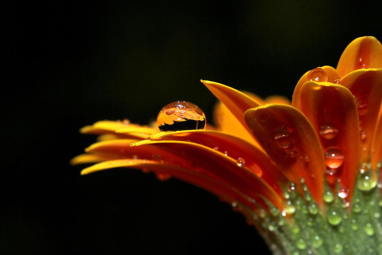 A Simple Flower 04