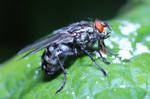 The Fly 05