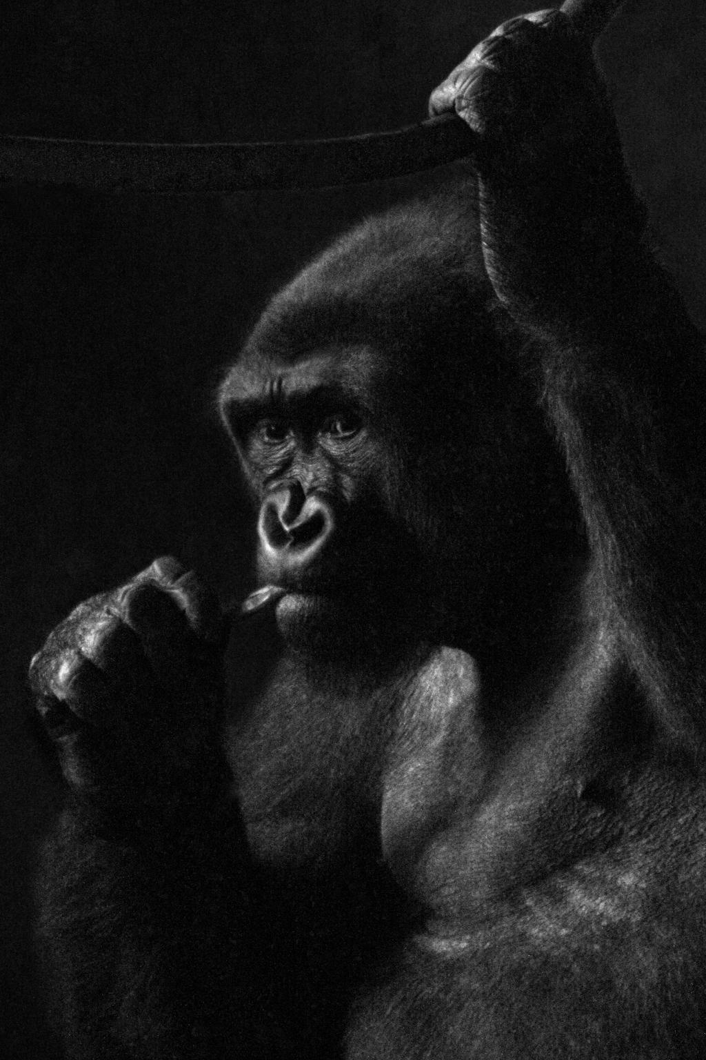 Gorilla in the Dark 01 by s-kmp