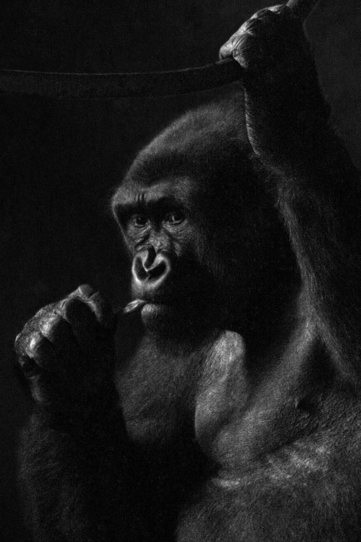 Gorilla in the Dark 01 by s-kmp