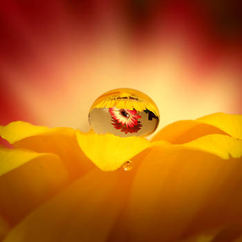 Yellow Flower, Red Flower? by s-kmp