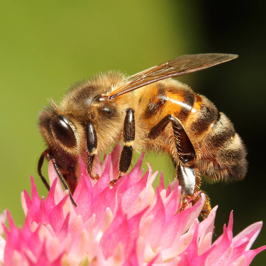 Bee 05 by s-kmp