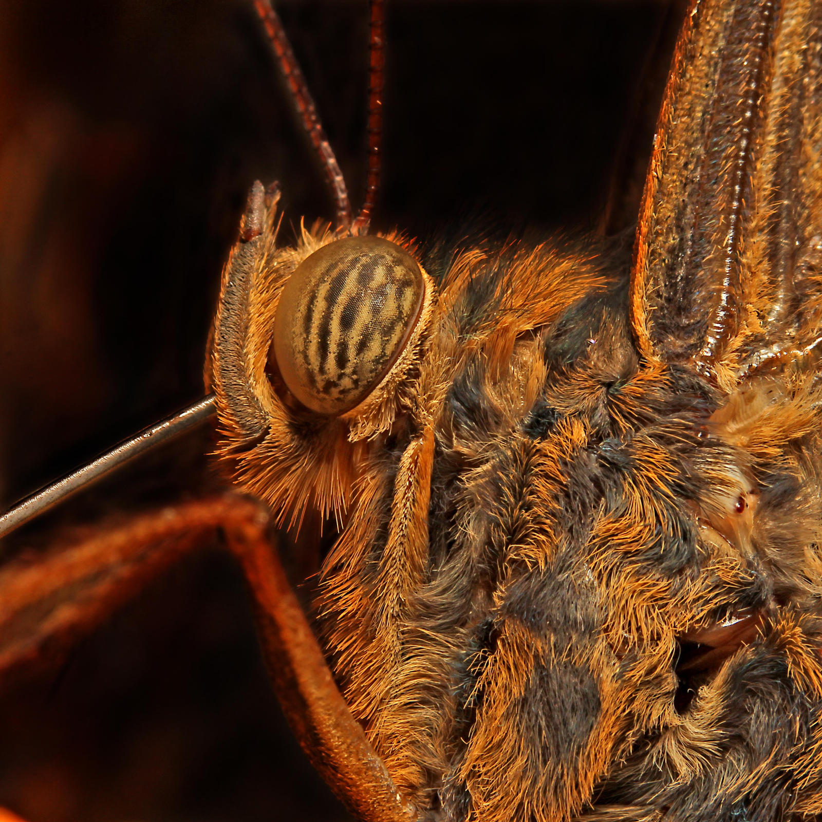 Close-up of a butterfly 01 by s-kmp