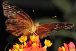 Butterfly on Flower 03
