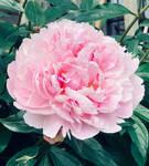 Summer in Bloom 1 by MissAerosmith1976