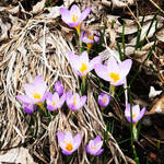 Spring in Bloom by MissAerosmith1976