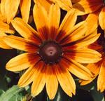 Summer in Bloom by MissAerosmith1976