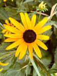 Mellow Yellow by MissAerosmith1976