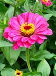 September Bloom 3 by MissAerosmith1976