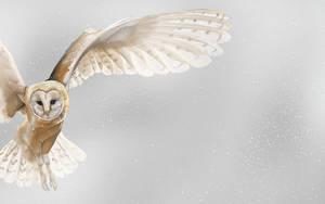 owl by sexygabriel