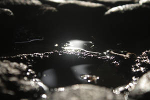 Macro pond
