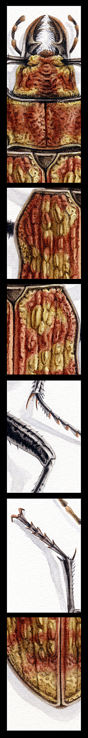 A hitleri details by albertoguerra