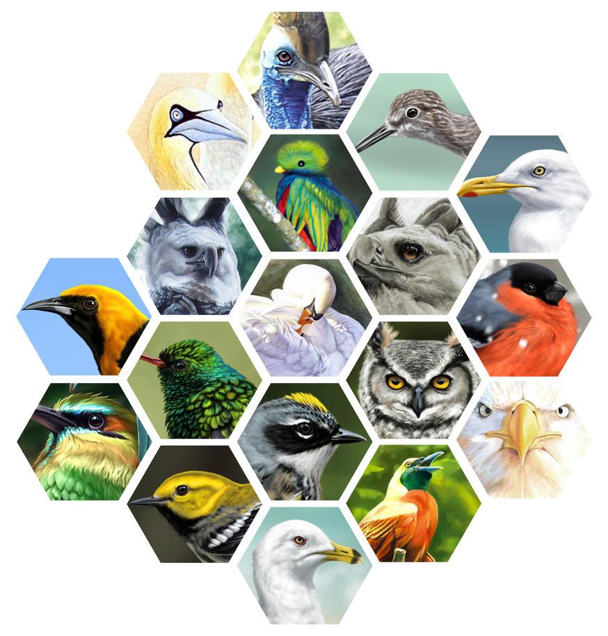 Aves by albertoguerra
