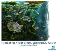 Xlakah fishes by albertoguerra