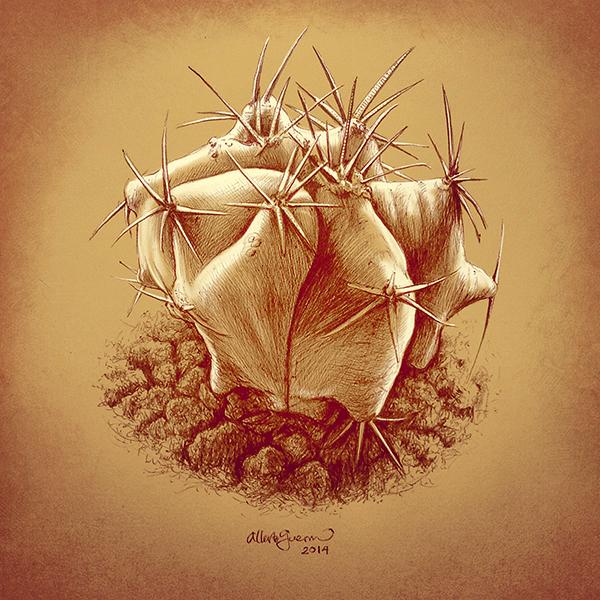 Star cactus / Astrophytum ornatum by albertoguerra