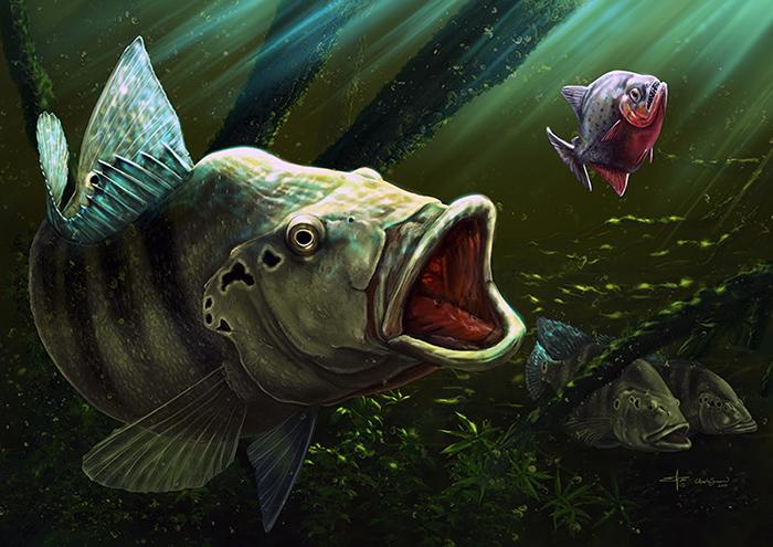 Tucunare and piranha by albertoguerra