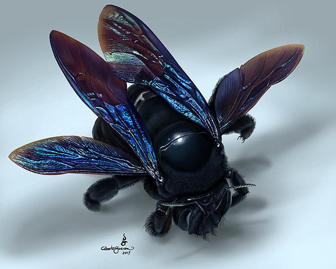 Blue winged Bumblebee by albertoguerra