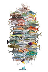 Fish heads fins and tails
