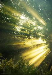 Golden Rays by Syrjusz