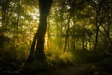 Forest by Syrjusz