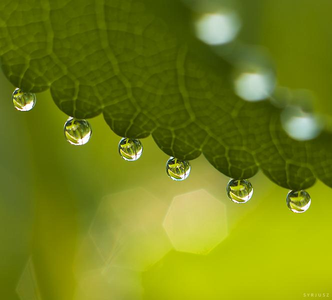 drops 03 by Syrjusz