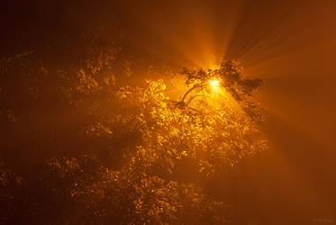 Fog XII by Syrjusz