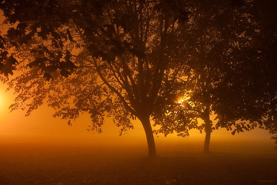 Fog XIV by Syrjusz