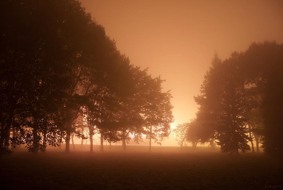 Fog XV by Syrjusz