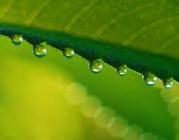 drops 04 by Syrjusz