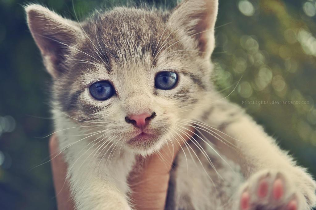 Oh, hi!