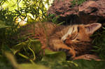 Baby tiger by MintLights