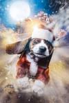 1221 Santa-puppy